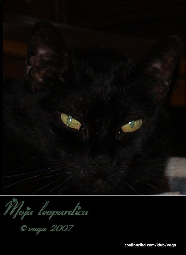 crne pantere maca slike vruće xxx seks isječke