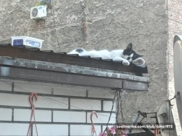 crna ulična maca