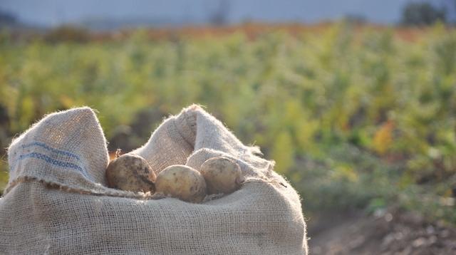 Agrovelebit lički krumpir