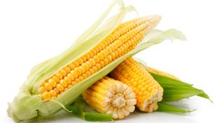 Kukuruz — Prehrambeni rječnik — Coolinarika