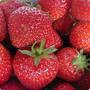 StrawberryLee