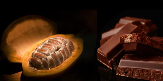 Sve o čokoladi