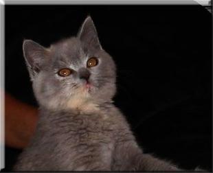 velike otvorene slike maca