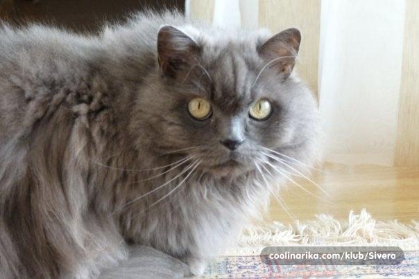 Najljepša crna maca