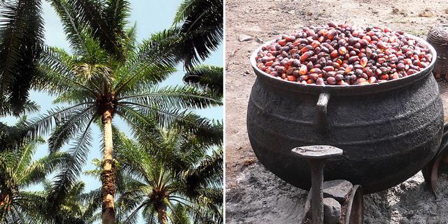Palmino ulje u prehrani